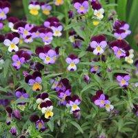 Цветы в саду.Название :: Андрей