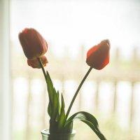 весняні квіти :: Ira Oleynik