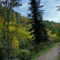 Белокуриха.Осень,лес.Тропинка. :: Владимир Михайлович Дадочкин