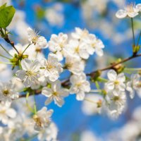 Весна :: Дмитрий Алексеев