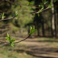 Павловск. Весна, апрель... :: Елизавета Вавилова