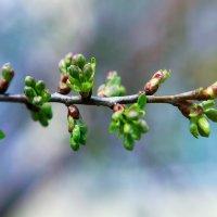 Весна приехала) :: Anna Lipatova