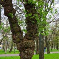 Дерево :: Виктория Мацук