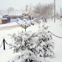 Смирнов,доброе  утро!- ехидно  прошептала сегодня  зима. :: Андрей Смирнов