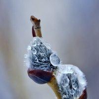 Весна с зимою борются :: Алексей Окунеев
