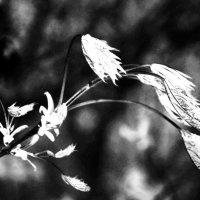 Будь упрямой, весна! :: Ирина Данилова