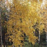 Осень... :: Николай Варламов