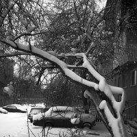 А у нас во дворе... Апрельские сюрпризы... :: Pavel Kravchenko