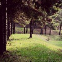 лес :: Денис Говорилкин