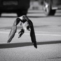 Ворона на Каменном острове :: Оксана Соколова