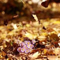 Осенний ветерок :: Вера Шамраева