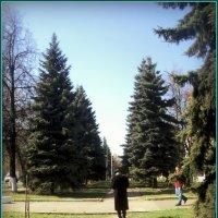 Глядел он ласково и долго на всех кто встретится ему, глядел на птиц, глядел на ёлку... :: Ольга Кривых