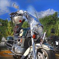 Один из коней наездников Латино Американской Мотоциклетной Ассоциации... :: Владимир Хиль