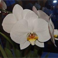 Ночная орхидея :: Андрей Дворников