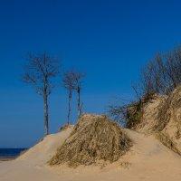 Балтийские дюны :: Vasiliy V. Rechevskiy