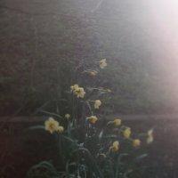8 :: cvety_zla ///