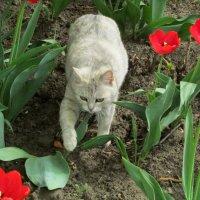 любитель тюльпанов :: Marina Timoveewa