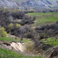 Нежная весна :: Зоя Коптева