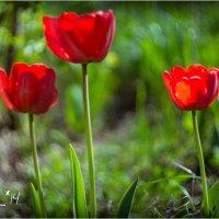 tulip4 :: yameug _