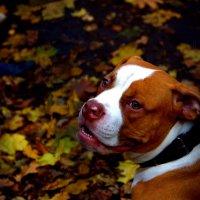 Собака. Осень. Холод. :: Дмитрий Журлов