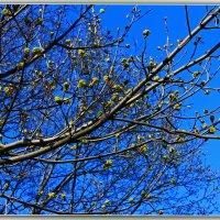 Весна! :: Александр Лейкум