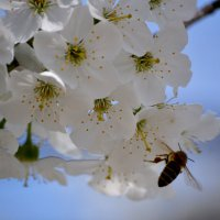 Весна :: Виктория Гавриленко