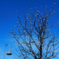 Весна идёт, Весне - дорогу! :: Valentina Altunina