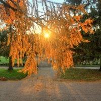 Осеннее солнце :: Сергей Григорьев