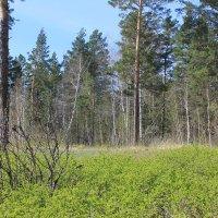 Весенний лес. Апрель. :: Олег Афанасьевич Сергеев