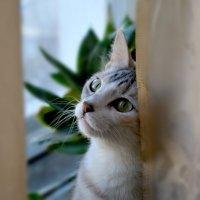 Кошка на окошке :: Татьяна Якуш