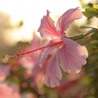 Солнечный цветок :: Maksim Dubinsky