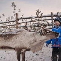 Дети севера :: Светлана Ульянова