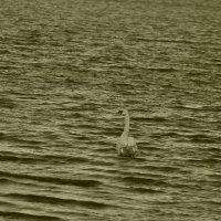 swan :: Dm. S.