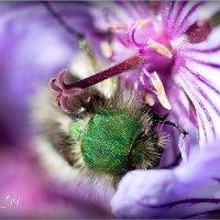 жук green :: yameug _