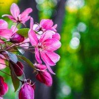 Райское яблочко в парке кованых фигур :: Дарья Довгопольская
