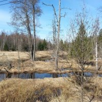 Опушка леса :: Соня Бакулина