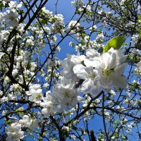 Весна)) :: Юлия Маляренко
