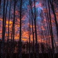 Красный закат :: Николай Мелонов