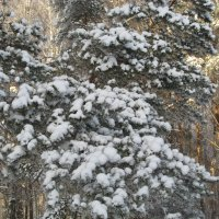 Зима в Пущино :: Елена Китанина
