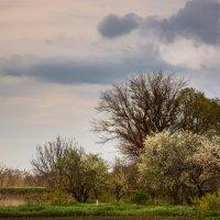 Весна :: Сергей Гойшик