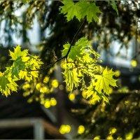 Свет весенний :: Наталья Rosenwasser