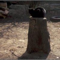 Будни городских кошек :: Ольга Кривых