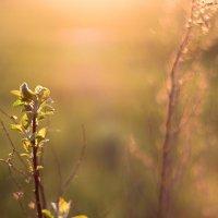 весна :: Юрий Кальченко