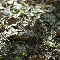 Кто знает, что я за птица?.. :: Miha Шохин