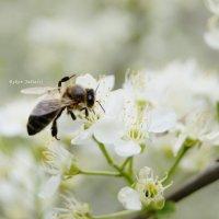 Весна :: Юлия Быкова