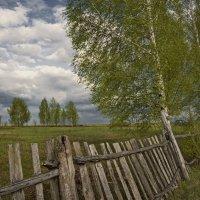 Весна у старой изгороди :: Владимир Макаров