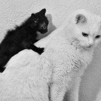 Пап,а почему ты белый,а мы черные? :: Алиса Бронникова