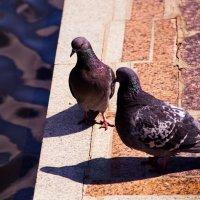*птицы мира у фонтана :: Арсений Корицкий