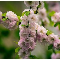 Краски весны :: Petrovich