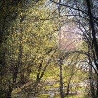 Весна :: Астарта Драгнил
